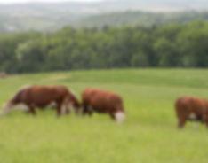 100% Grasfed Beef