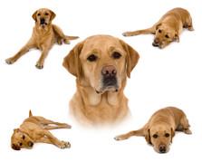 hund 1.jpg