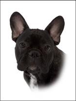 hund 5.jpg