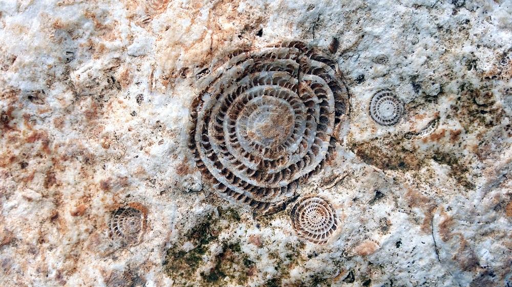 Likya bölgesinde yollarda fosil çok