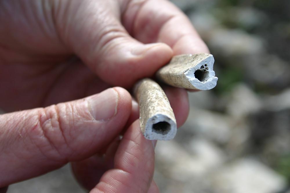 Bones found at Phellos, central Lycia