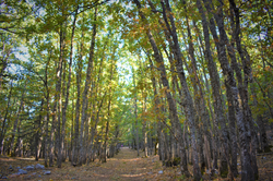 Trek the Volcanic Oak Forest in Turkey