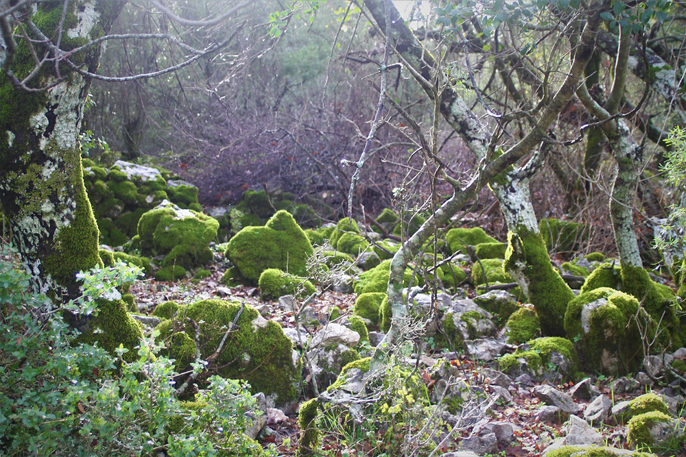 Mossy beds on the alternative lycian route between Gey and Sidyma