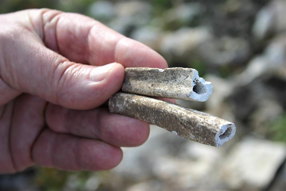 Bones found at Phellos
