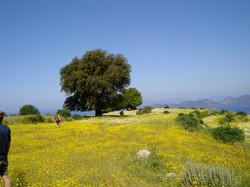 Lycian way between Faralya and Kabak