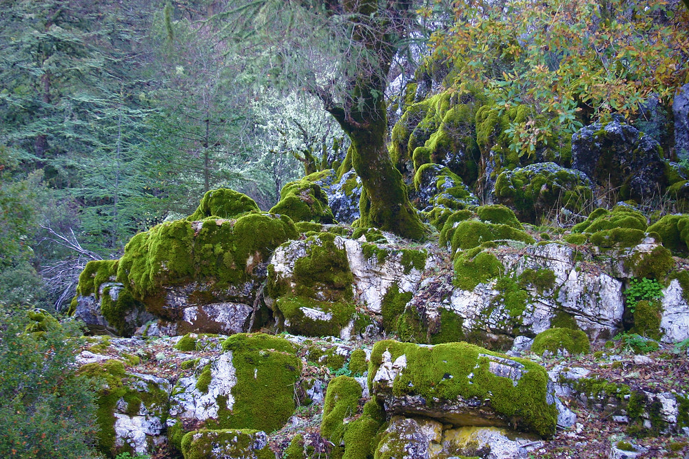 Th Verdant moss of a lycian North face