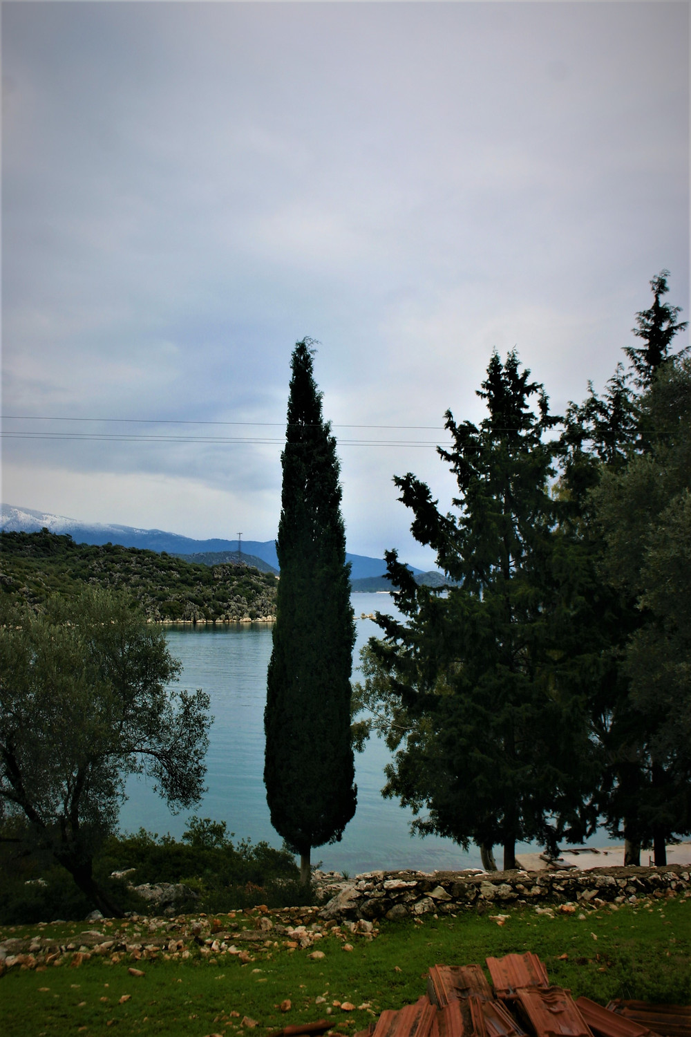 cypress tree at Gokkaya which can be trekked past on the Lycian Way