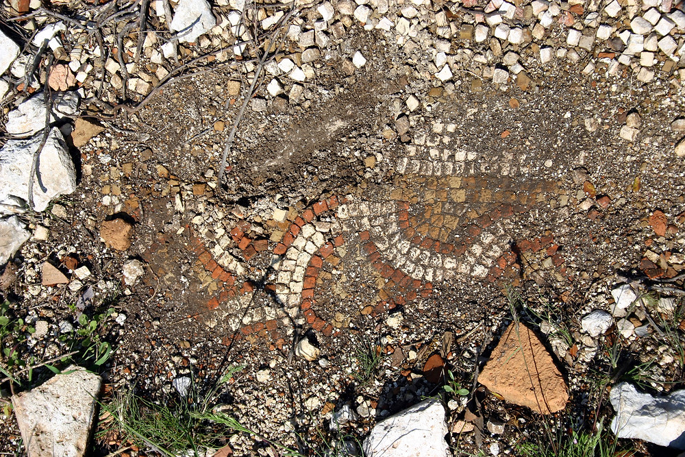 Mosaic at Phellos recently unearthed by illegal diggers