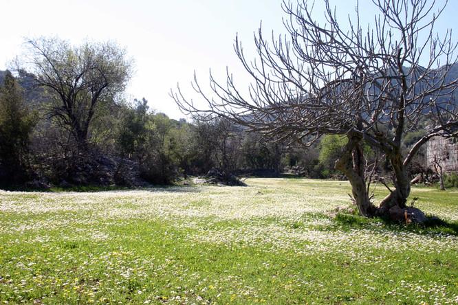 Spring Meadow near Sidyma in Lycia