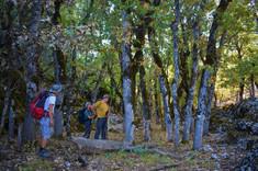 Inside the Kasnak Forest