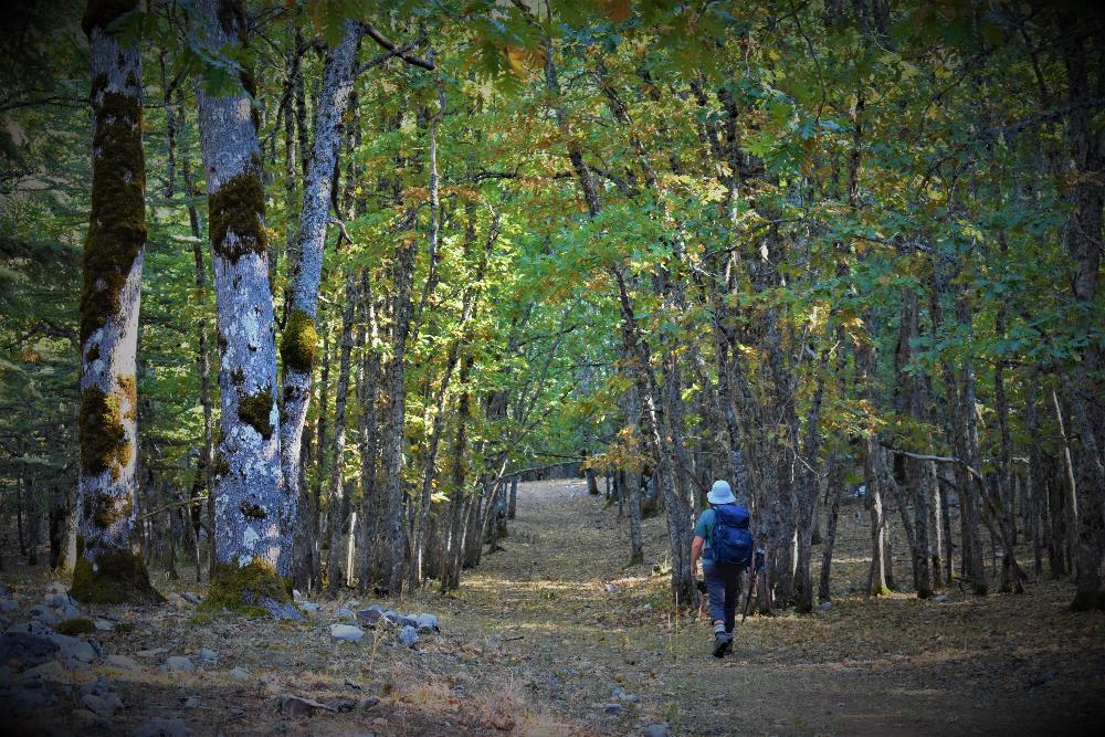 Hiking through the Volcanic Oaks