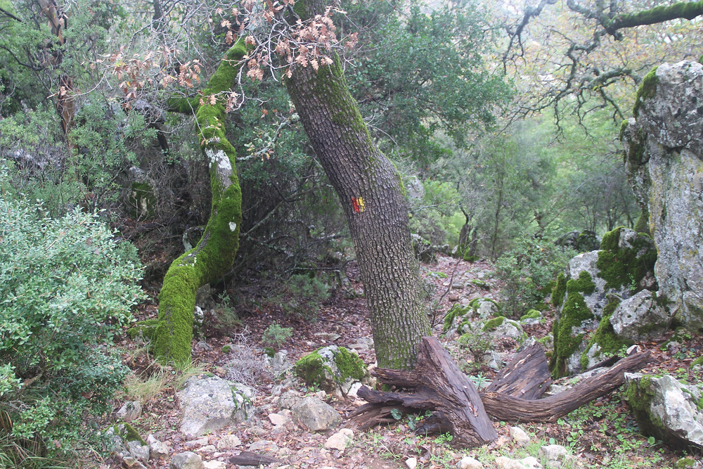 marks and moss on the fethiye alternative route through Lycia above Sidyma