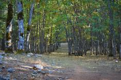 Kasnak Forest