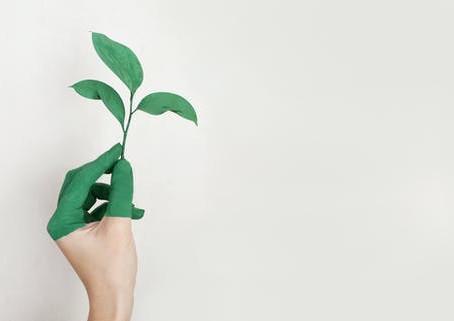¿Conoces el significado real de un producto ecológico?