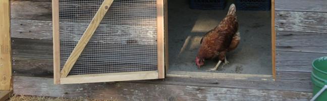 Reclaimed Wood Chicken Coop