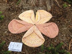 Pink Pentagonal Plant