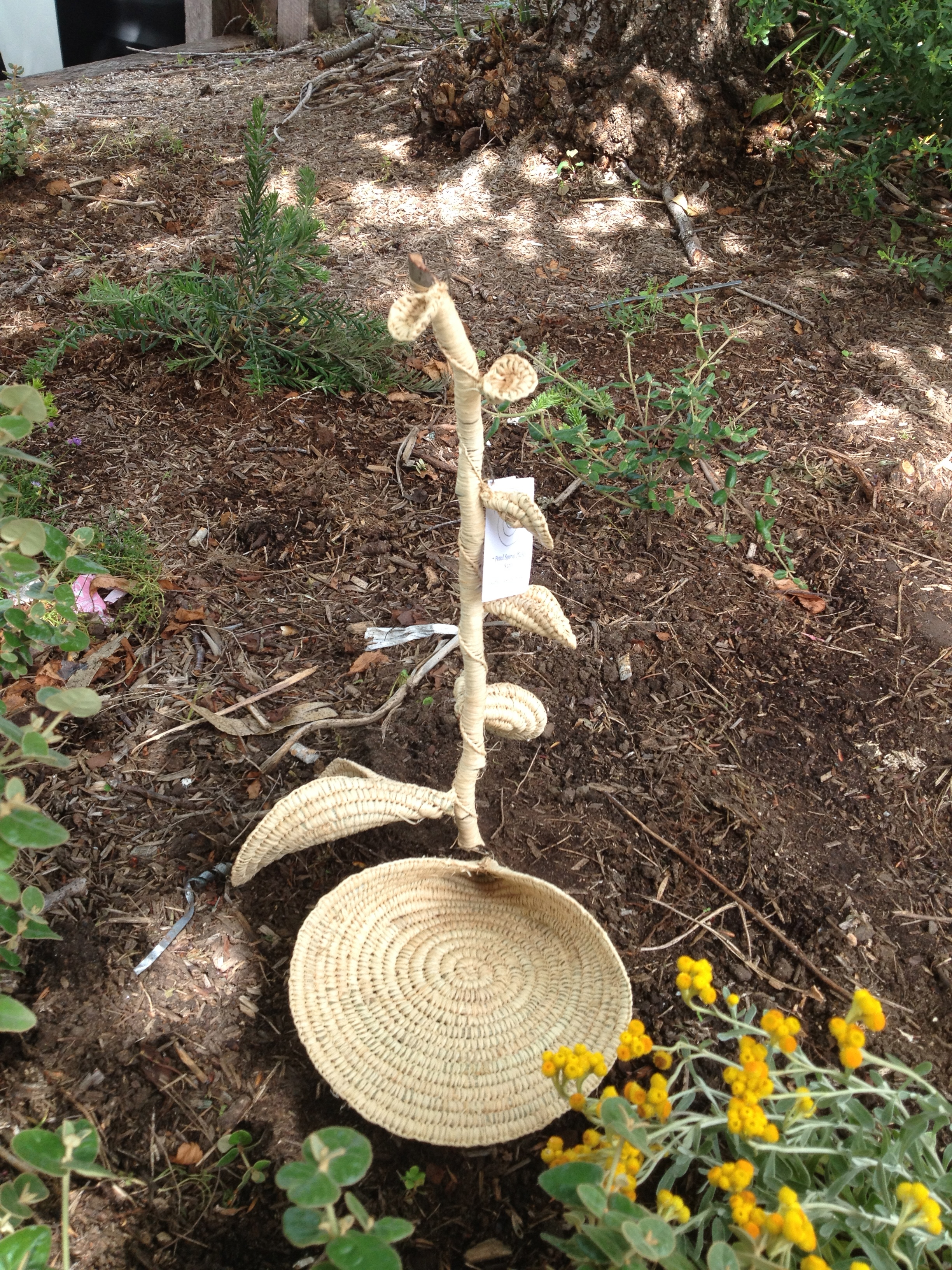 Spiral Plants