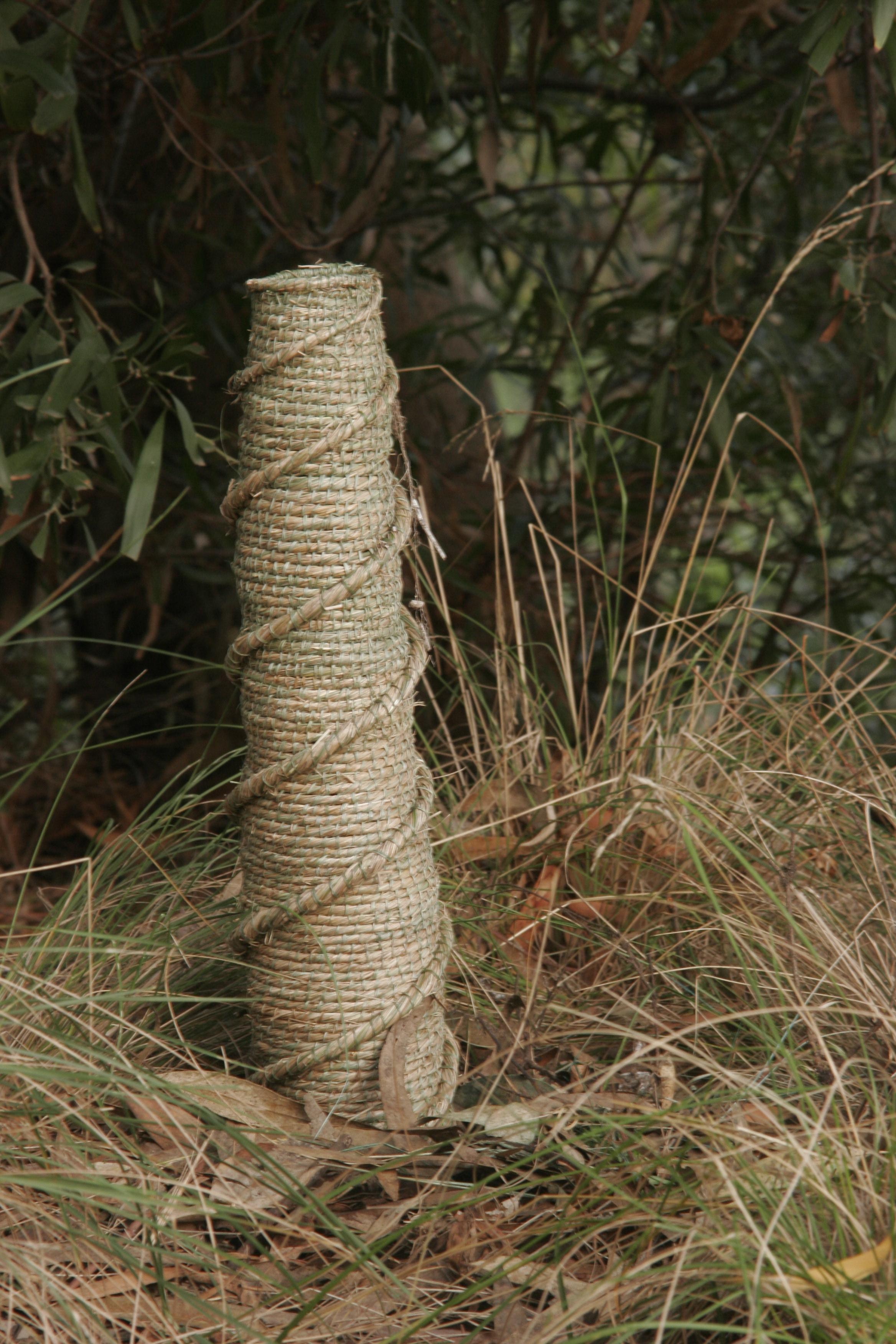 Acacia Spiral_close up