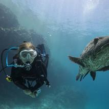 Cod Hole, Australia