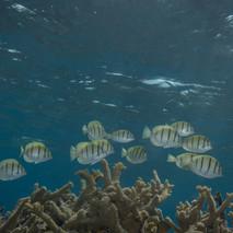 Palmyra Atoll, USA.