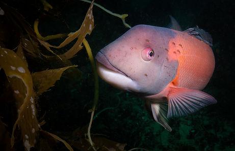 santacruz-diving-20180526116.jpg