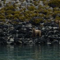 Tongass Nationoal Forest, Alaska.