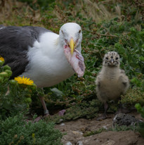 Anacapa Island, Channel Islands National Park, California