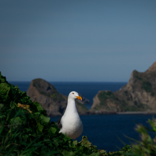 Anacapa Island, Channel Islands National Park,  California.
