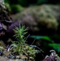 Tongass National Forest,  Alaska, USA.