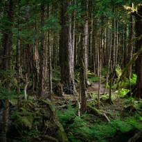 Tongass National Forest, Baranof Island, Alaska.