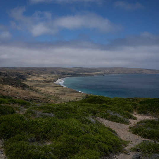 Santa Rosa Island, California, USA.