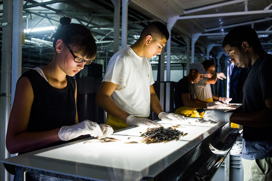 Techniciens aquacoles pour le groupe Aqualande.