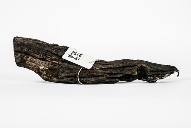Bois extrait d'un ancien bassin de décantation sur la plage de l'Amélie.