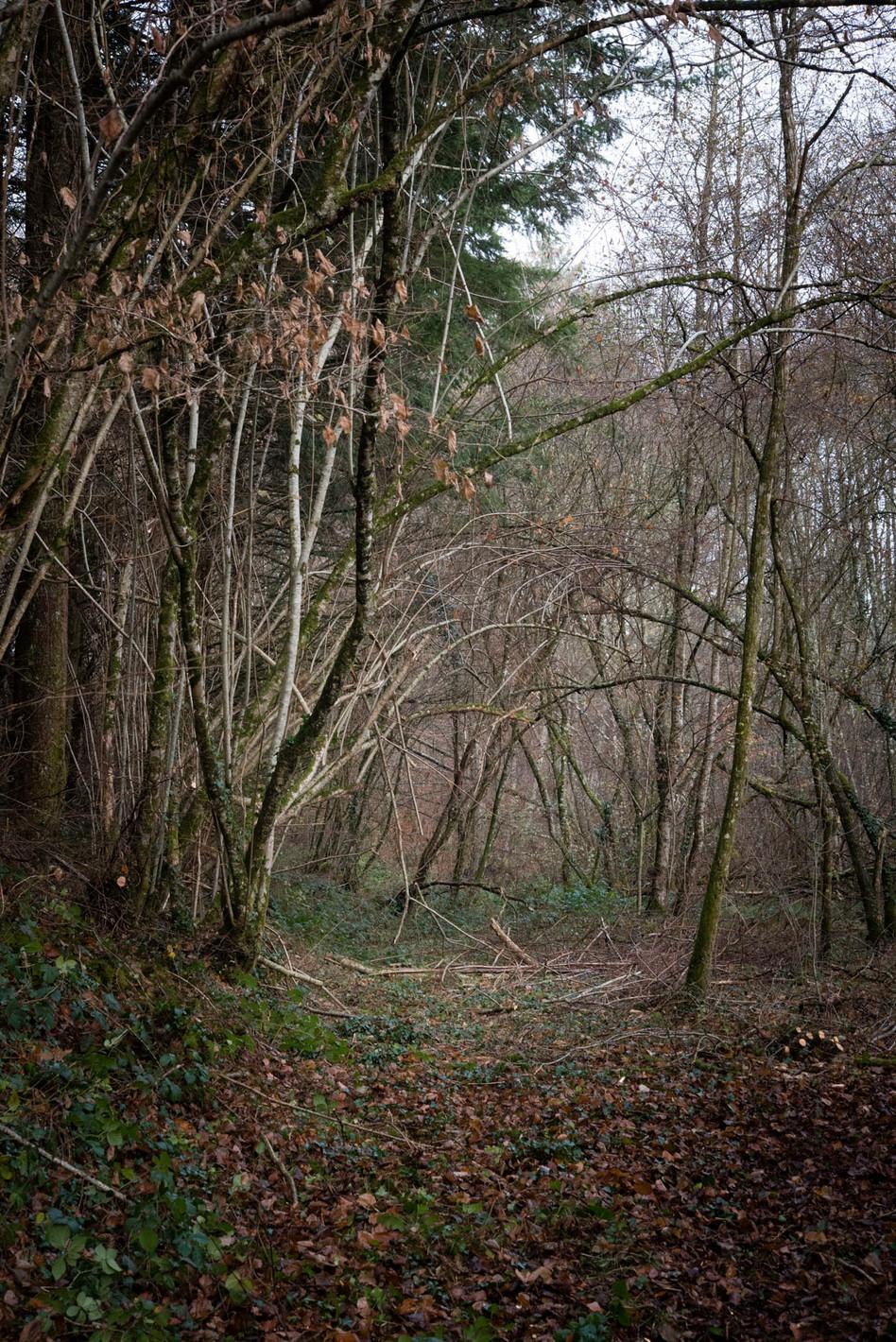 Le Conte perdu #01 La forêt