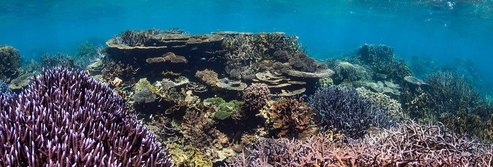 Coral Garden  (CG1114)