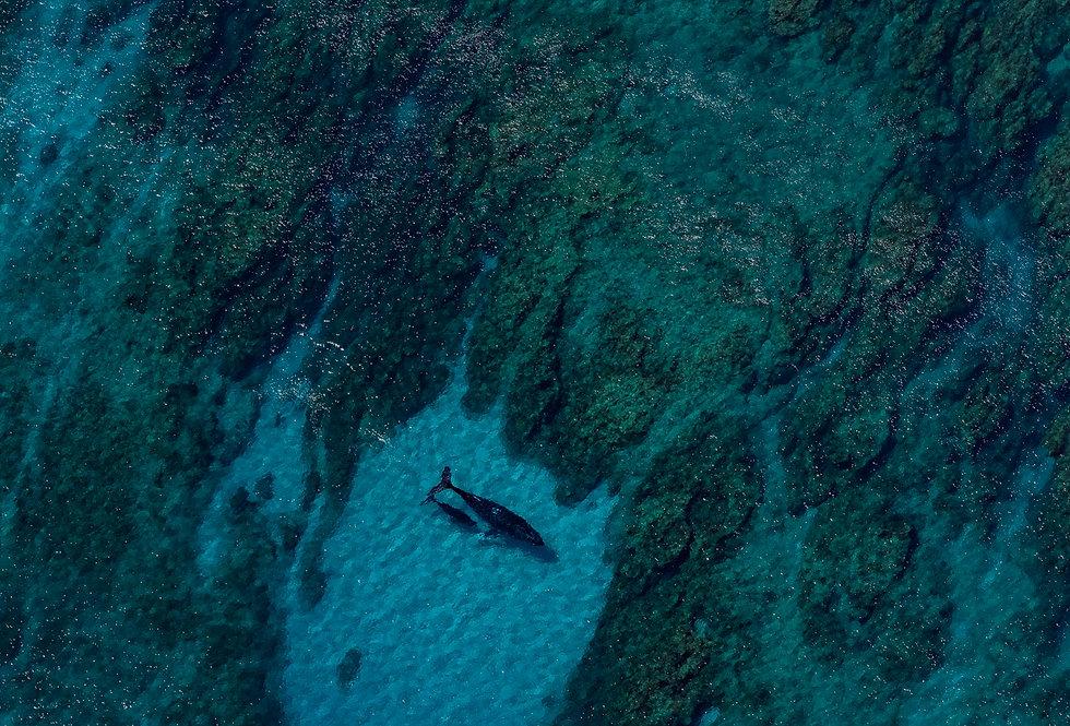 Humpback Whale Highway (AER1786)