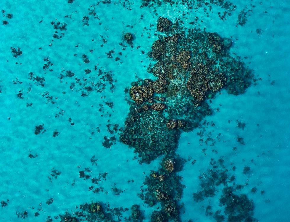 Ningaloo Reef  (AER6320)
