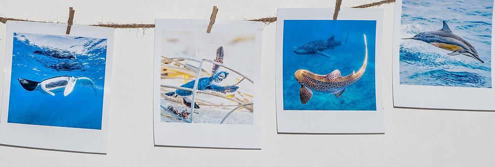 10pc Polaroid Print Kit