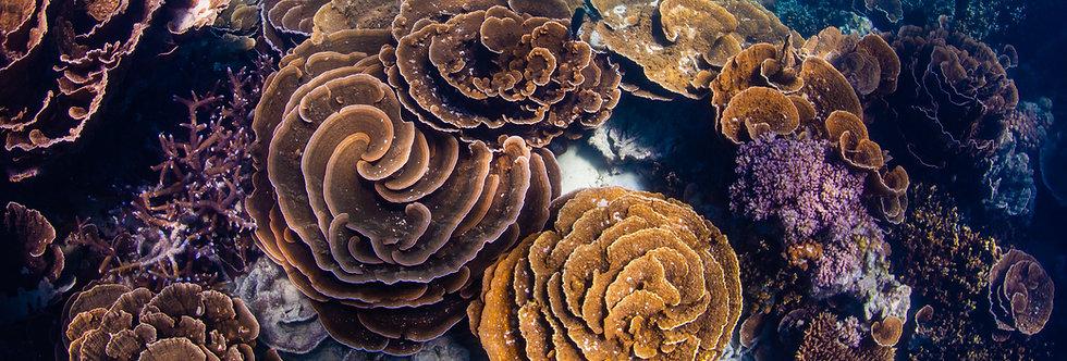 Coral Garden (CG1040)