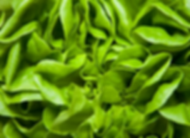 Salad, Greens