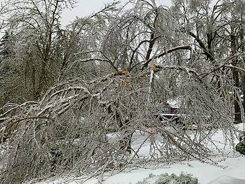09-Broken Cherry Full Tree.jpg