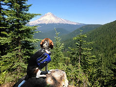 Misha and Hood 07-2013 Veda Hike 1.jpg