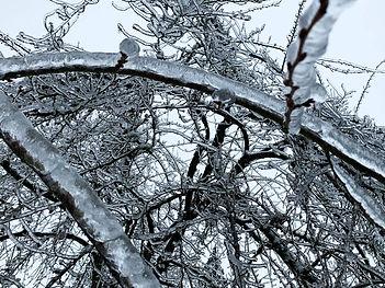 05-Cherry Tree in Ice.jpg