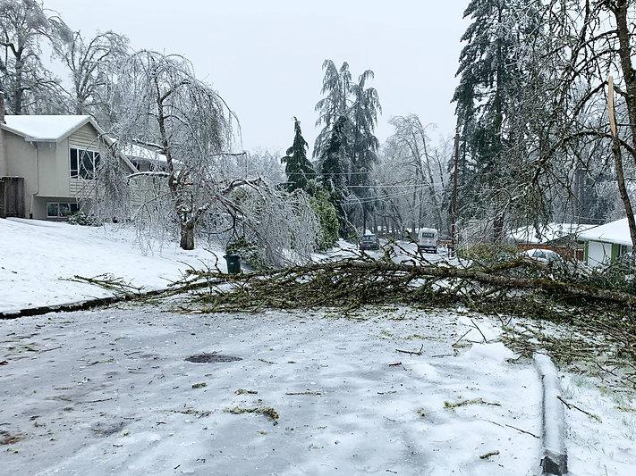 13-Downed Tree on White Cloud.jpg