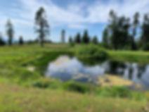 07-07 Pond.jpg