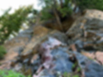 07-24 Obsidian Tree.jpg