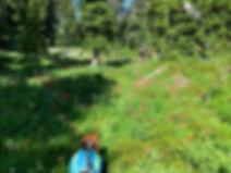 08-03 Meadow.jpg