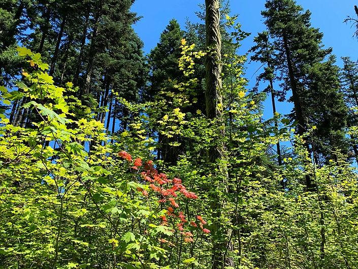 08-01 Fall Leaves.jpg