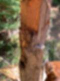 08-01 Bear.jpg