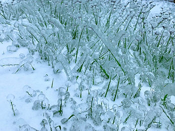 04-Grass in Ice.jpg